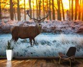 Red Deer Winter wall mural kitchen preview