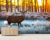 Red Deer Winter wall mural living room preview