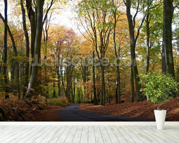 Colourful Autumn Woodland mural wallpaper room setting