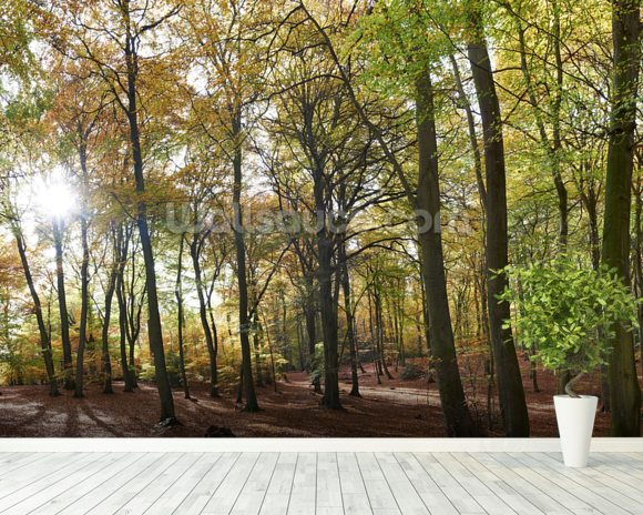 Autumn Woodland wall mural room setting