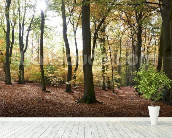 Autumn forest panoramic wallpaper wall mural wallsauce usa for Autumn forest wallpaper mural