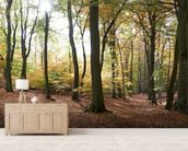 Autumn Forest Panoramic wallpaper mural living room preview