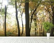 Autumn Forest Panoramic wallpaper mural in-room view