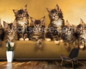 Kittens Panoramic wallpaper mural kitchen preview