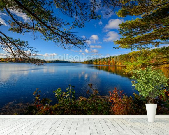 Forest lake in autumn wallpaper wall mural wallsauce usa for Autumn forest wallpaper mural