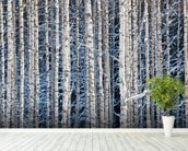 Snowy Birch Forest wallpaper mural in-room view