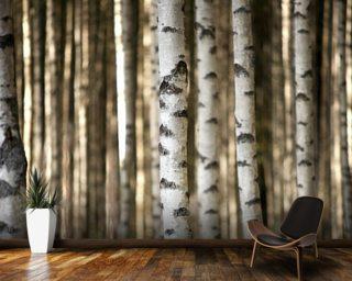 birch trees wall mural wallpaper