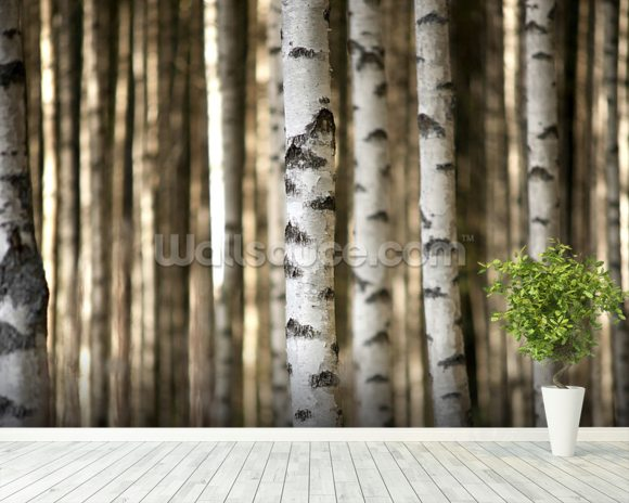 Birch trees wallpaper wall mural wallsauce usa for Tree wallpaper for walls