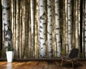 Birch Trees mural wallpaper kitchen preview