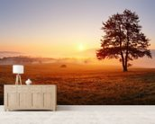 Meadow Sunset wall mural living room preview