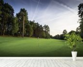 Sunset & Pine Trees, Pine Ridge Golf Club, Surrey, England wall mural in-room view