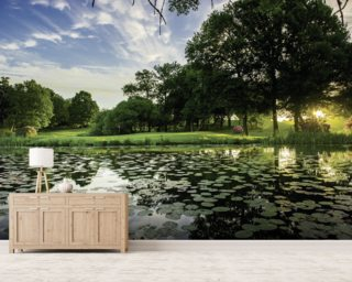 Dawn Lily Pond, The Hertfordshire Golf & Country Club, England Wall Mural Wall Murals Wallpaper