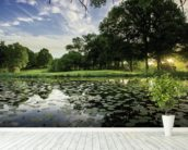 Dawn Lily Pond, The Hertfordshire Golf & Country Club, England mural wallpaper in-room view