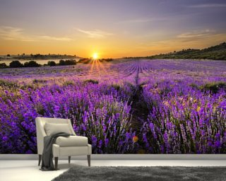 Sunset over Lavender Field wall mural