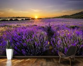 Sunset over Lavender Field wall mural kitchen preview