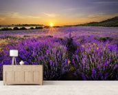 Sunset over Lavender Field wall mural living room preview
