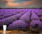 Fields of Lavenders wallpaper mural kitchen preview