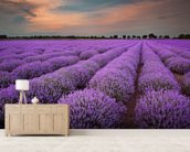 Fields of Lavenders wallpaper mural living room preview