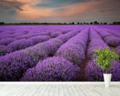 Fields of Lavenders wallpaper mural in-room view