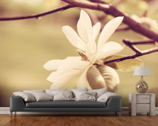White Magnolia Blossom Wall Mural Wallpaper Wall Murals Wallpaper