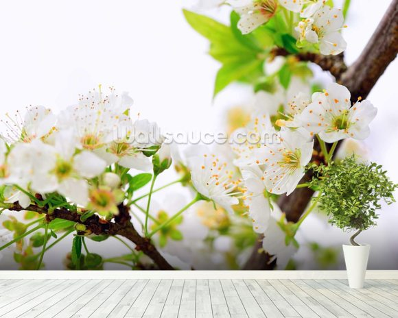 Plum Tree Flower wallpaper mural room setting
