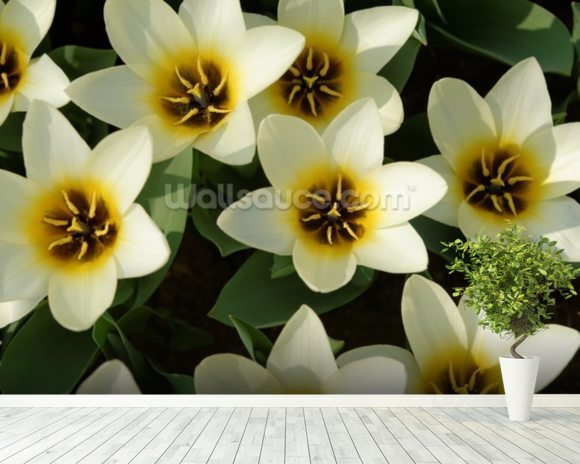 White Tulips wall mural room setting