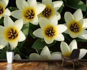 White Tulips wall mural kitchen preview