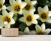White Tulips wall mural living room preview