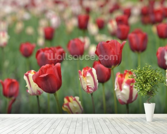 Tulip Garden wall mural room setting