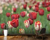 Tulip Garden wall mural kitchen preview