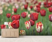 Tulip Garden wall mural living room preview