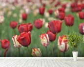 Tulip Garden wall mural in-room view