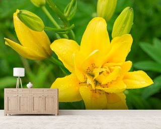 Yellow Lily mural wallpaper