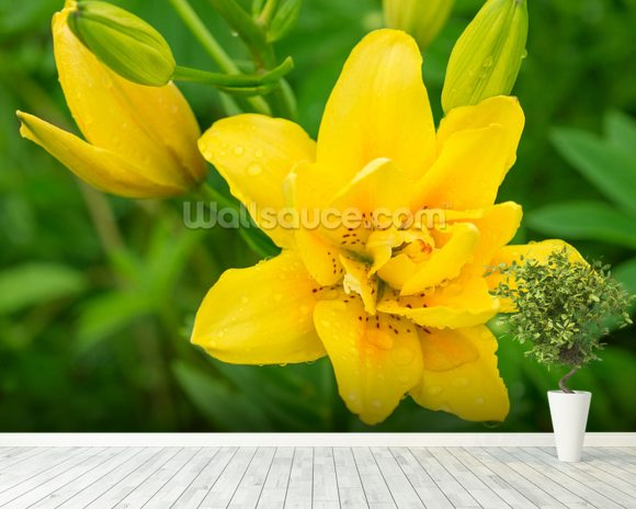 Yellow Lily mural wallpaper room setting