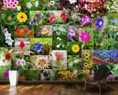 Summer Flower Collage wall mural kitchen preview