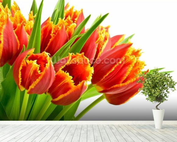 Orange Tulips wallpaper mural room setting