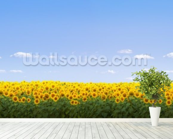Sunflowers wall mural room setting