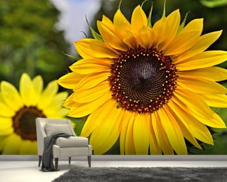Sunflower wallpaper mural