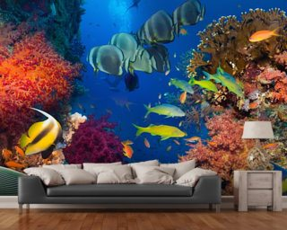Coral and Fish mural wallpaper