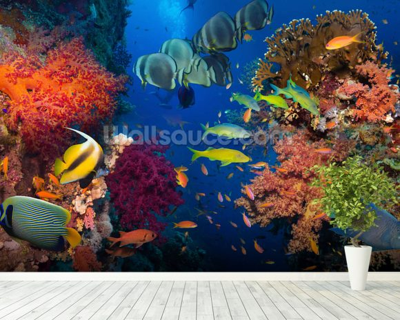 Coral and Fish mural wallpaper room setting