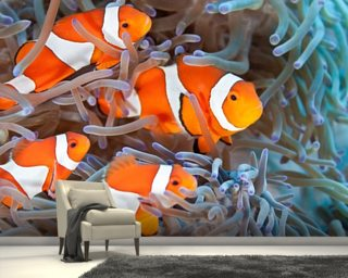 Clownfish Wallpaper Mural Wall Murals Wallpaper