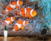 Clownfish wall mural kitchen preview