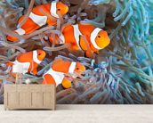 Clownfish wall mural living room preview