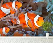 Clownfish wall mural in-room view