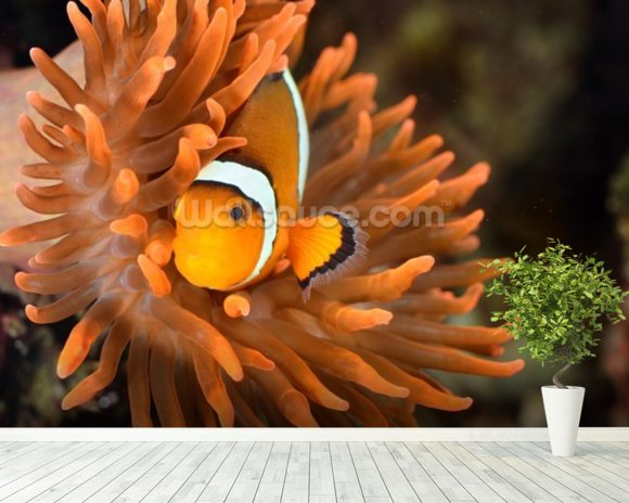 Clownfish in Marine Aquarium wallpaper mural room setting