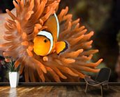 Clownfish in Marine Aquarium wallpaper mural kitchen preview