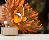 Clownfish in Marine Aquarium wallpaper mural living room preview