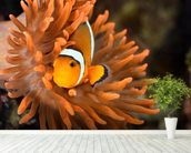 Clownfish in Marine Aquarium wallpaper mural in-room view