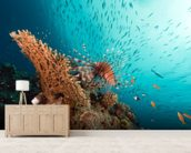 Lionfish mural wallpaper living room preview