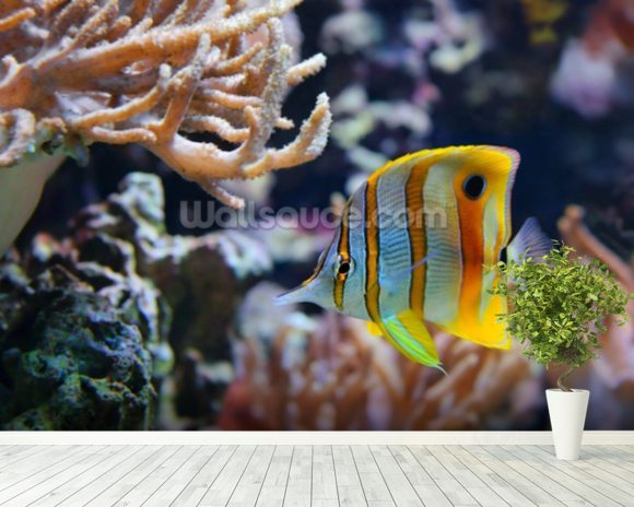 Copperband Butterflyfish wall mural room setting